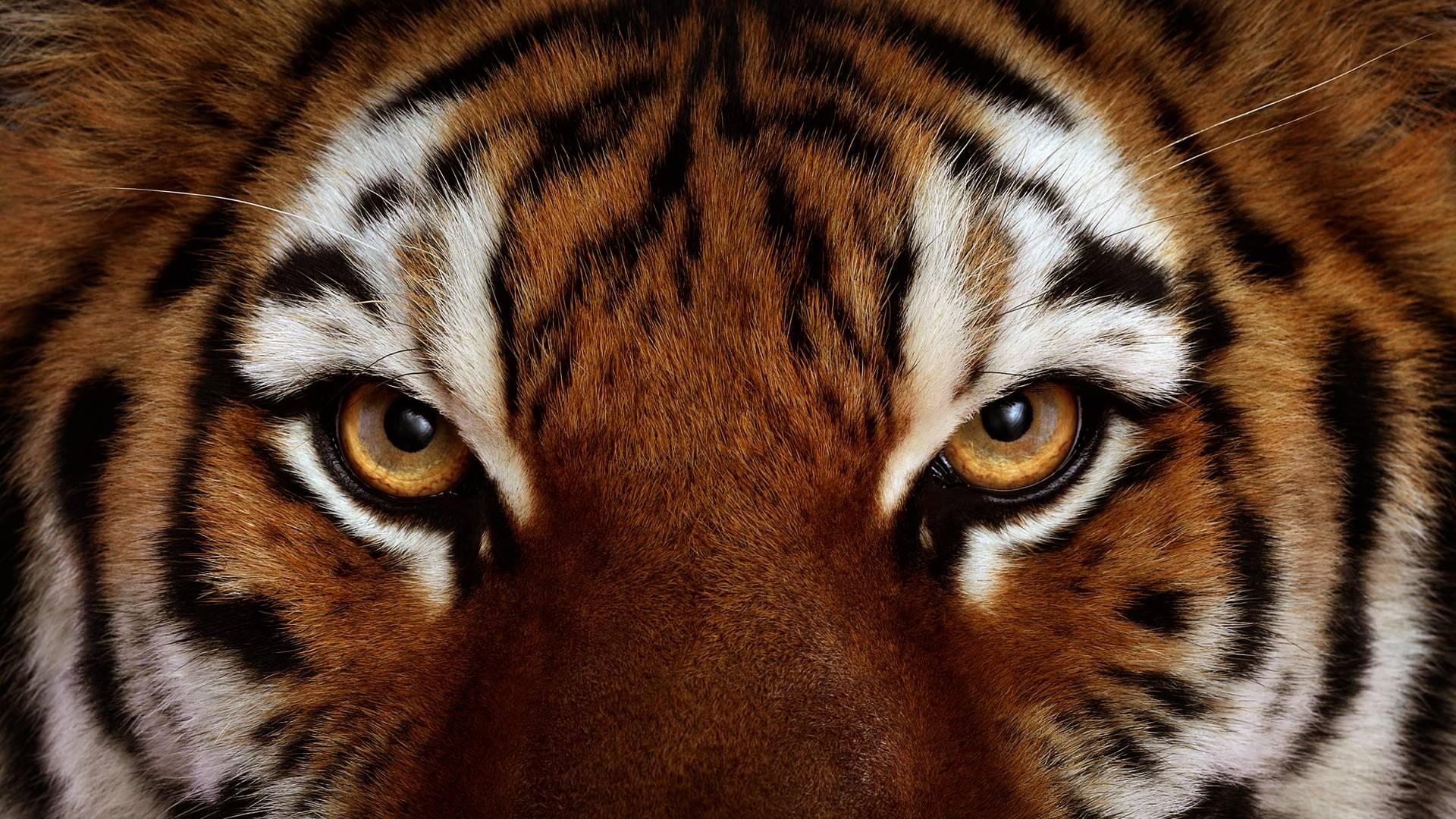 Hector Robles innovación transformacion tigre